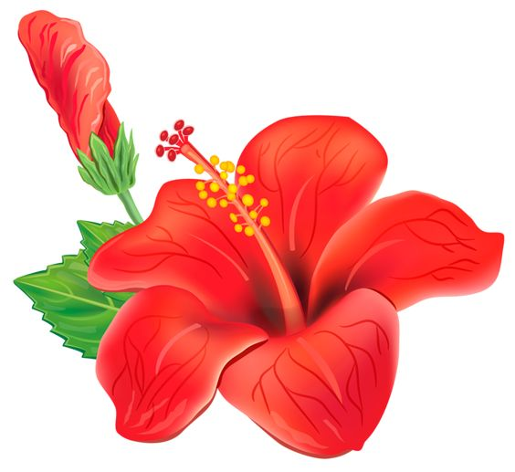 Google images flower clipart png freeuse download Red Exotic Flower PNG Clipart Picture | cris | Pinterest | Flower ... png freeuse download