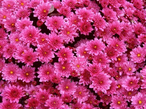 Google images flowers free svg royalty free Google Image Result for http://www.free-wallpapers-free.com ... svg royalty free