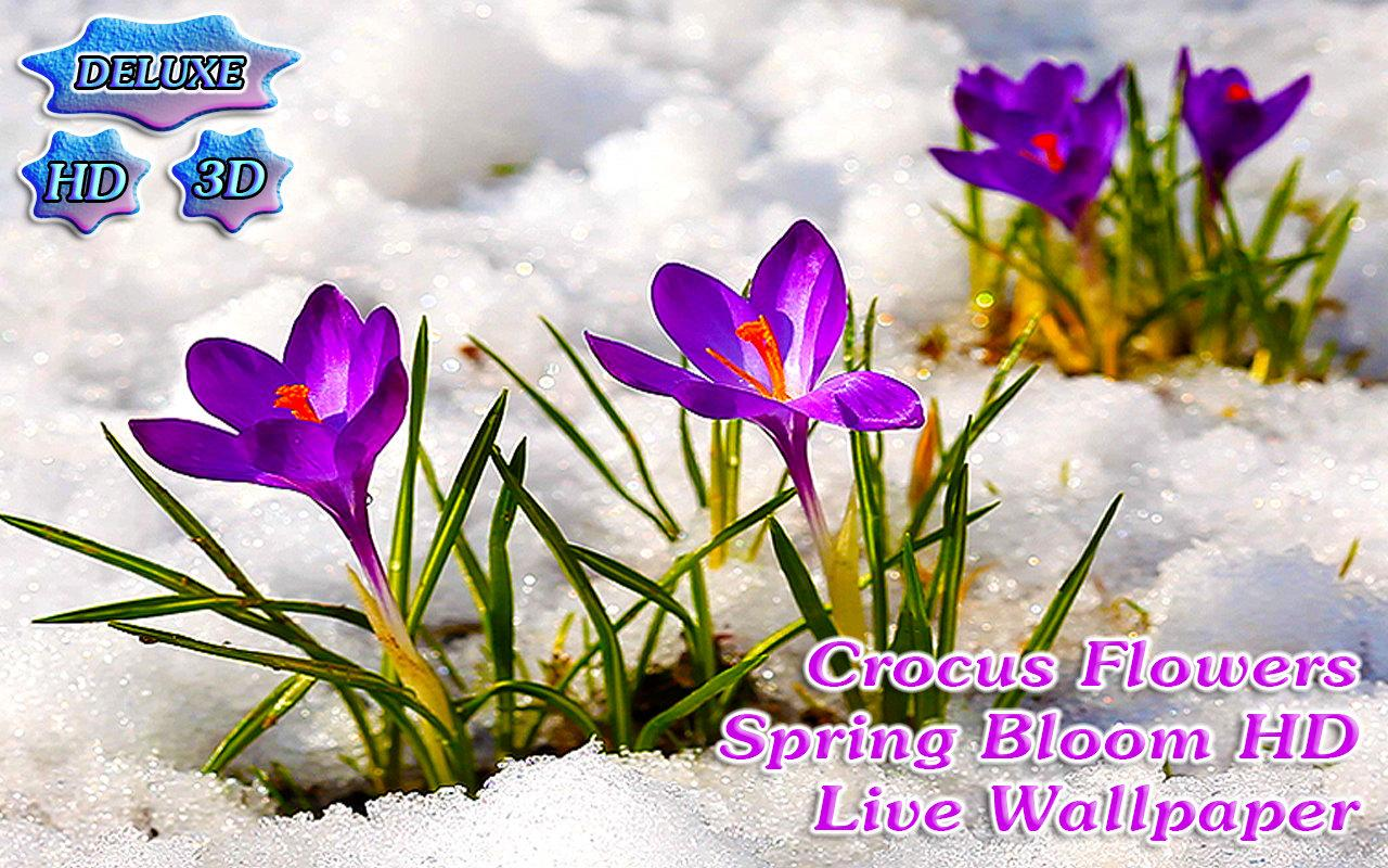 Google images flowers free clip art royalty free download Crocus Flowers Spring Blooming - Android Apps on Google Play clip art royalty free download