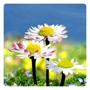 Google images flowers free banner free download Google images flowers free - ClipartFest banner free download