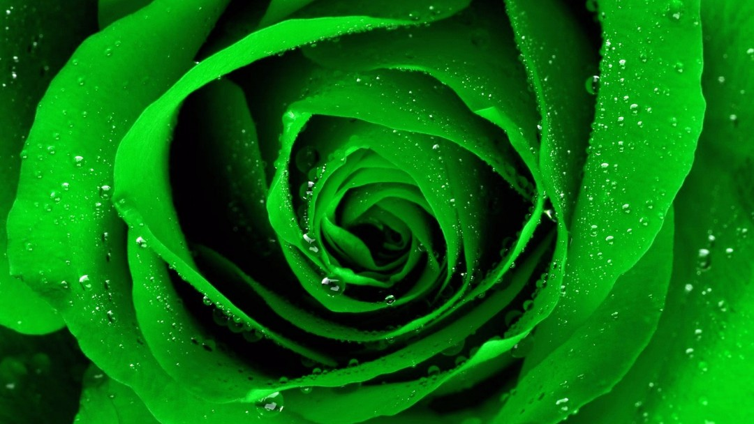 Google images flowers free clip transparent download free green flowers - HD Desktop Wallpapers | 4k HD clip transparent download