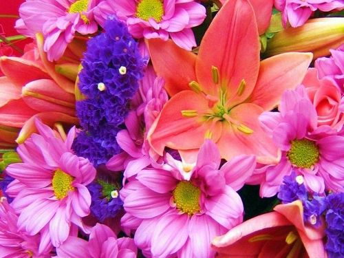 Google images flowers free clip library download Google Images Flowers Wallpaper - WallpaperSafari clip library download