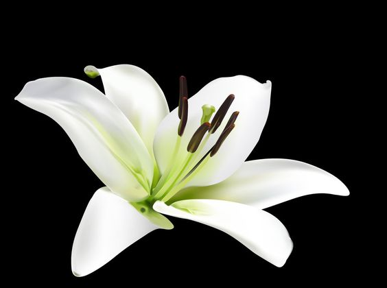 Google images lilies svg freeuse lily flower - Google Search | LILY FLOWER | Pinterest | Wells ... svg freeuse