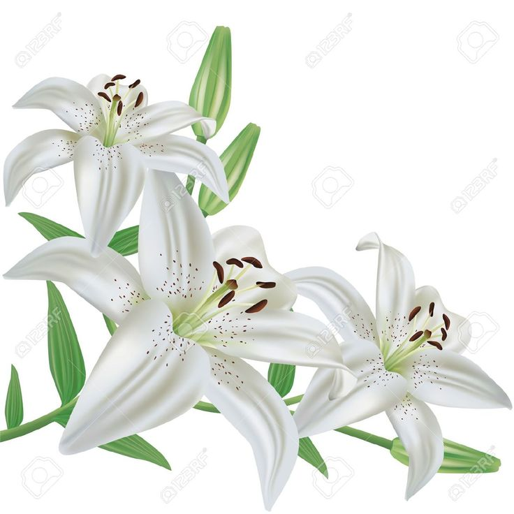 Google images lilies svg black and white stock 17 Best images about LILY FLOWER on Pinterest | Flower wallpaper ... svg black and white stock