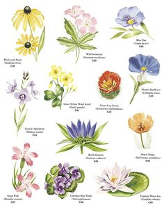 Google images wildflowers vector transparent download flower types with pictures - Google Search | Flowers | Pinterest ... vector transparent download