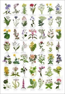 Google images wildflowers image library stock Google images wildflowers - ClipartFest image library stock