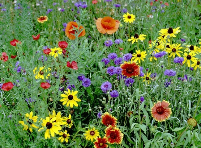Google images wildflowers clip art free download 17 Best images about
