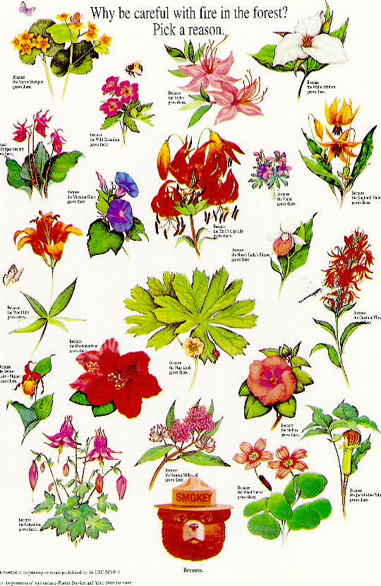 Google images wildflowers svg free library Google images wildflowers - ClipartFest svg free library