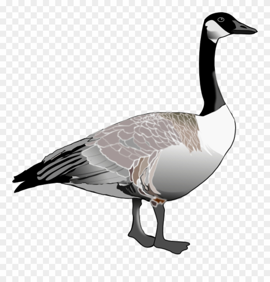 Goose pictures clipart jpg library stock Geese Clip Art - Canada Goose Black And White - Png Download (#64004 ... jpg library stock