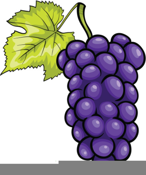 Graapes clipart vector black and white download Purple Grapes Clipart | Free Images at Clker.com - vector clip art ... vector black and white download