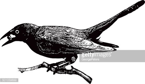 Grackle clipart free stock Grackle Eating premium clipart - ClipartLogo.com free stock