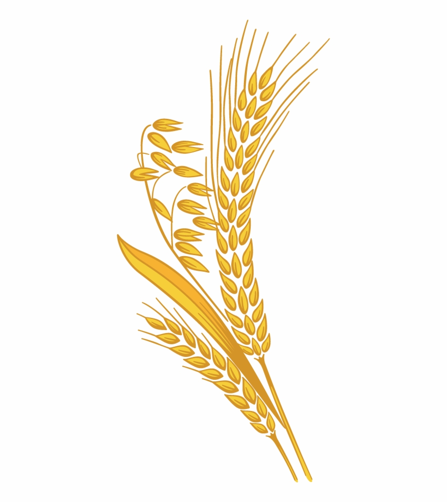 Grain clipart clipart freeuse stock Wheat Png - Rice Grain Clipart Png Free PNG Images & Clipart ... clipart freeuse stock