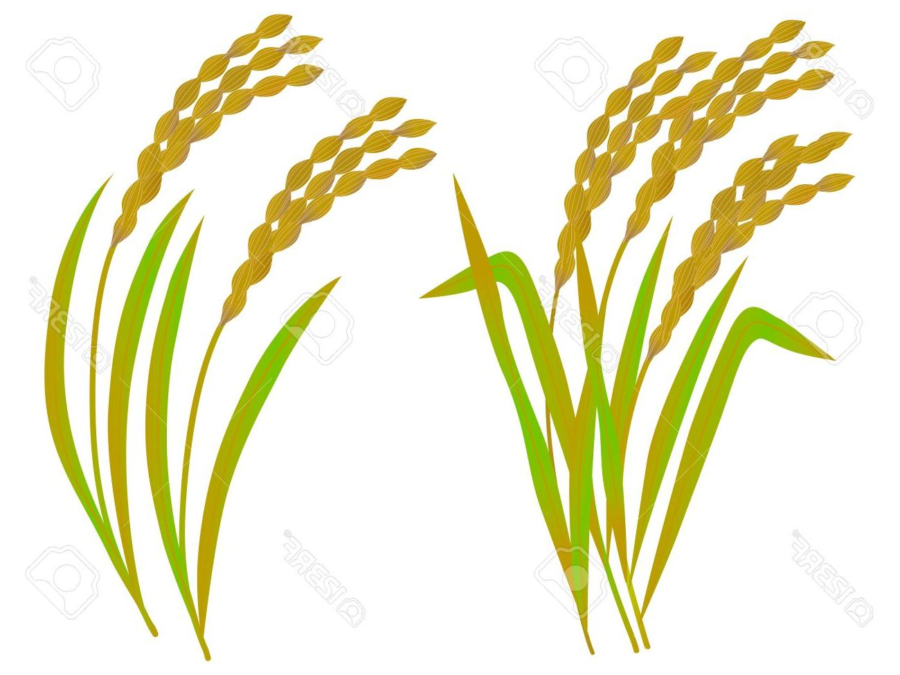 Grain clipart picture transparent stock Grain Clipart | Free download best Grain Clipart on ClipArtMag.com picture transparent stock