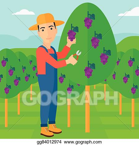 Grape farmer clipart banner black and white library Vector Illustration - Farmer collecting grapes. EPS Clipart ... banner black and white library