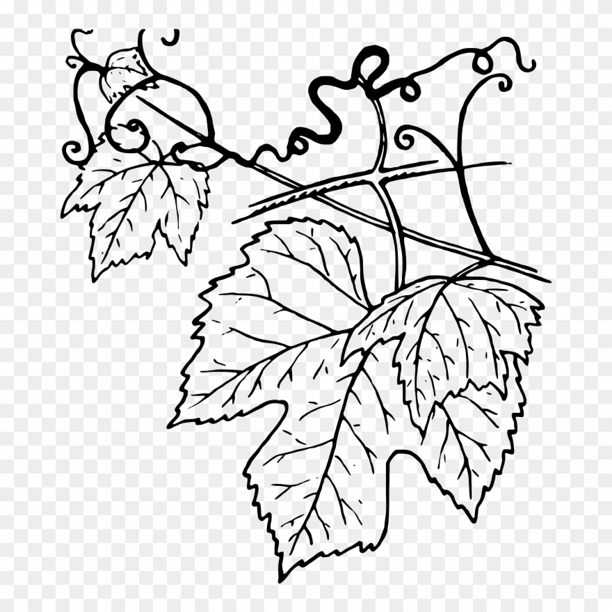 Grape leaf clipart black and white clipart royalty free library Ivy Clipart Grape Leave - Grape Leaves Black And White - Png ... clipart royalty free library