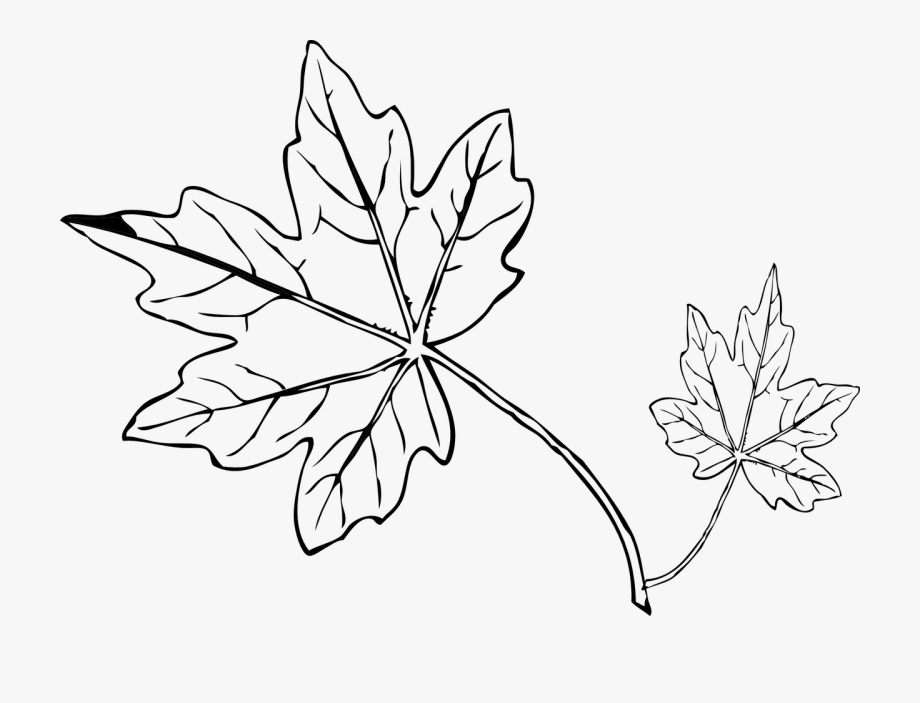 Grape leaf clipart black and white svg royalty free download Tree Leaves Drawing At Getdrawings - Grapes Leaves Clipart Black And ... svg royalty free download
