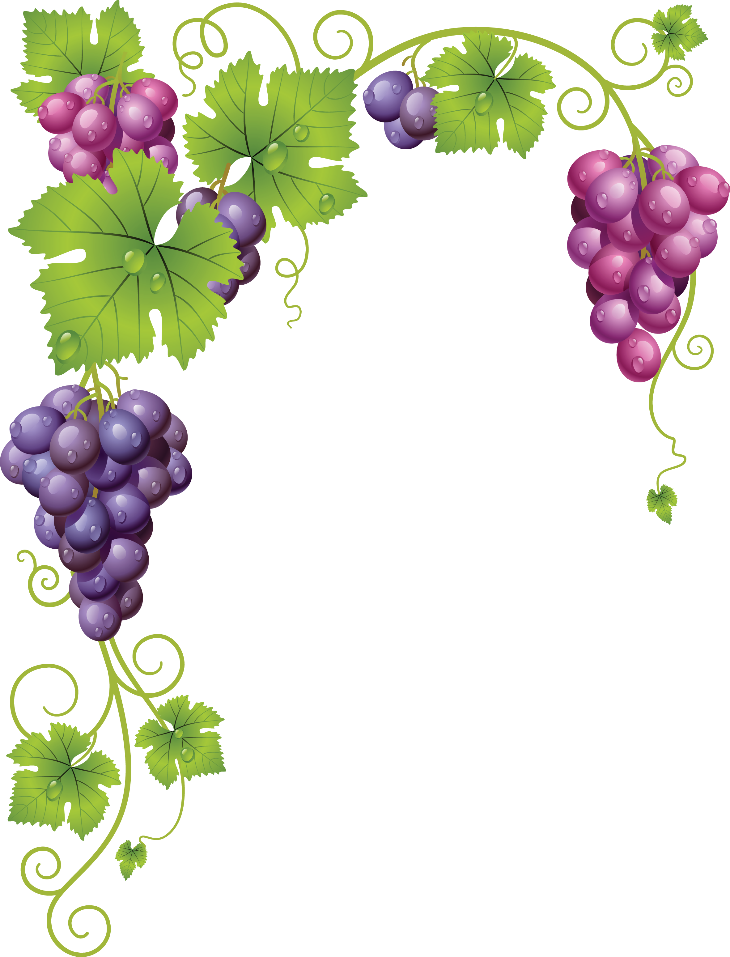 Grape tree clipart png free stock 0_af2c4_805f4cf5_orig (2362×3096)   Winogrona (Transparent ... png free stock