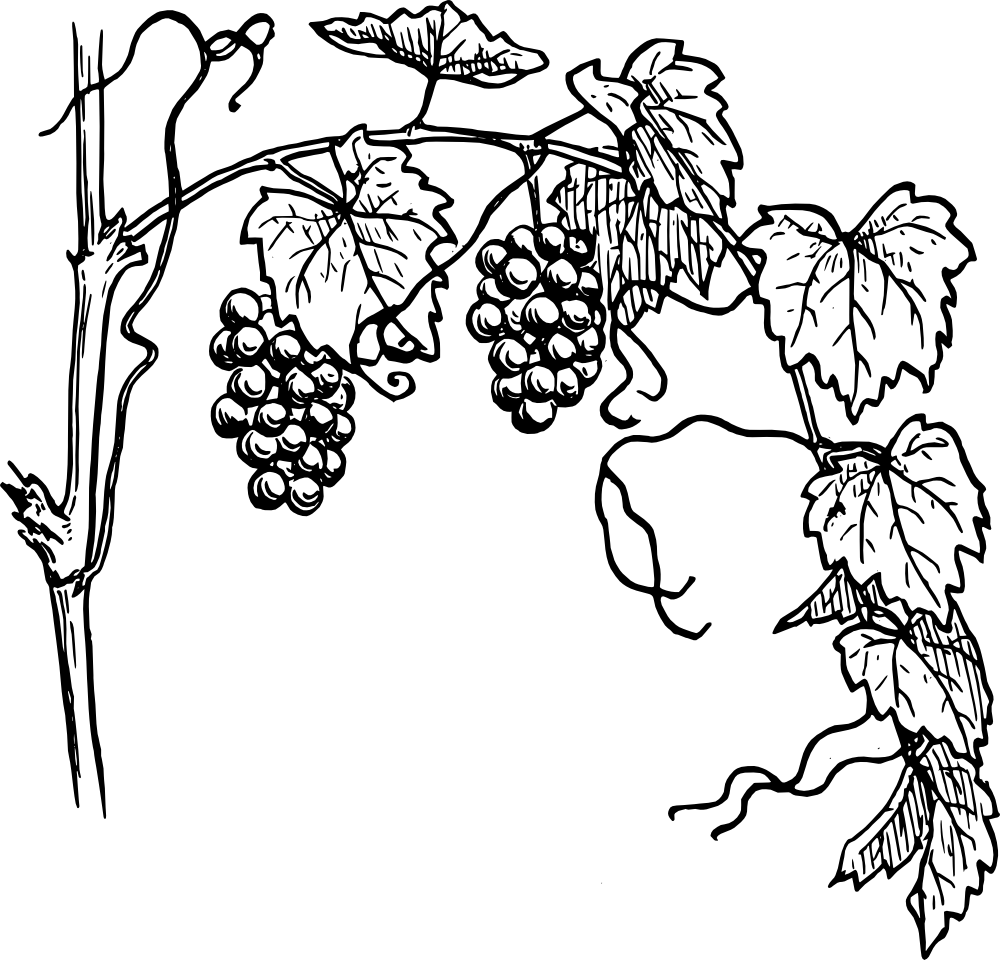 Grape tree clipart clip Grapevine Clipart transparent PNG - StickPNG clip