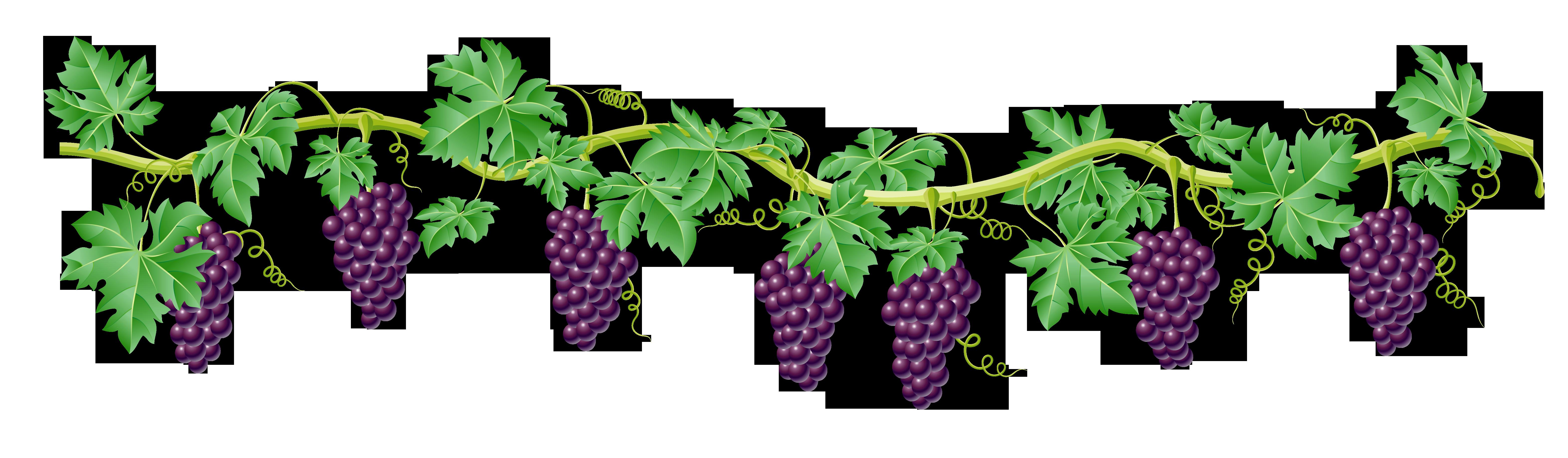 Vine cross clipart image transparent 28+ Collection of Grape Vines Clipart | High quality, free cliparts ... image transparent