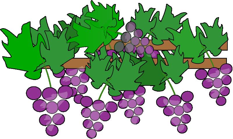 Grape tree clipart banner transparent download Grape Plant Clipart banner transparent download