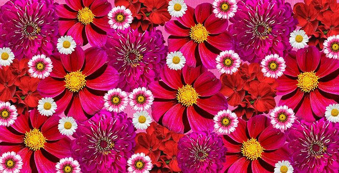 Graphic images of flowers graphic library library Flowers, Graphics - Free images on Pixabay graphic library library
