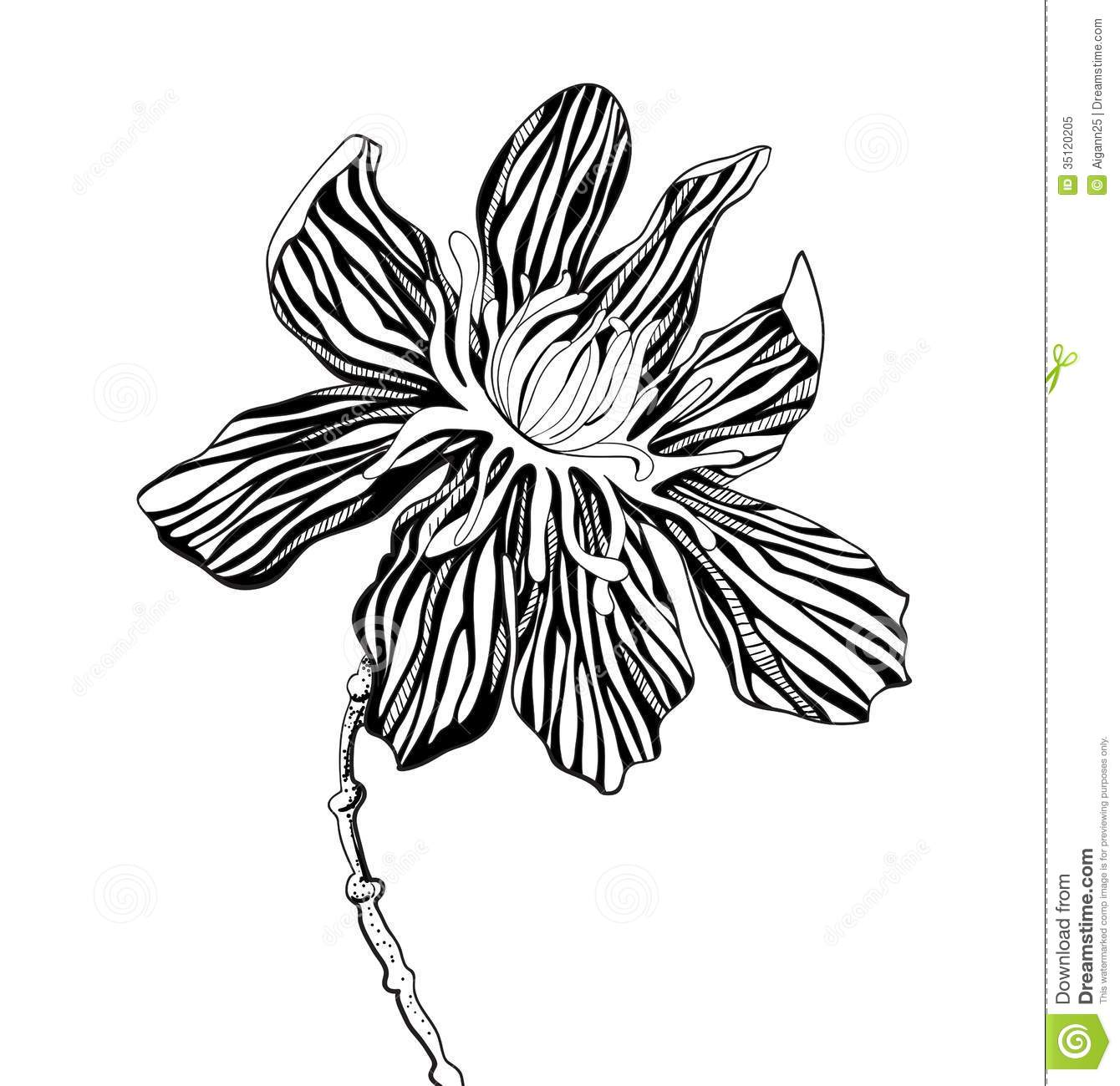 Graphic images of flowers graphic black and white Decorative Graphic Flowers Stock Photos - Image: 35120173 graphic black and white