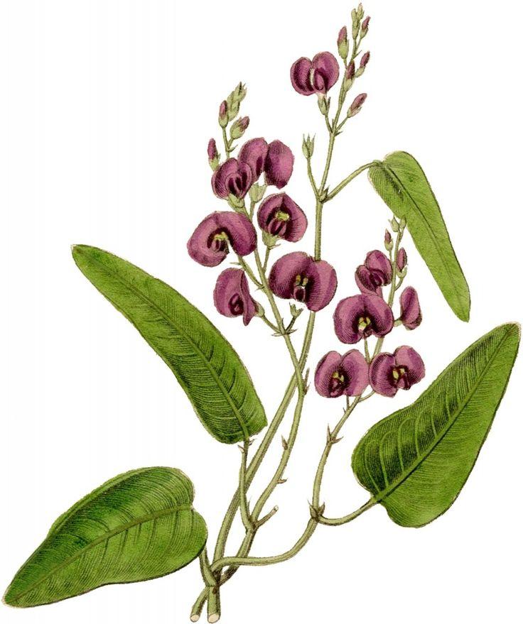 Graphics flower image download 17 Best ideas about Flower Graphic on Pinterest | Folk art ... image download