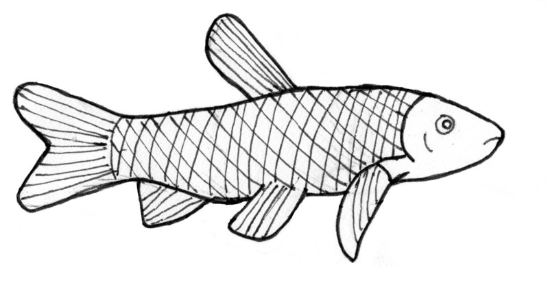 Grass carp clipart banner library stock Collection of Carp clipart | Free download best Carp clipart on ... banner library stock