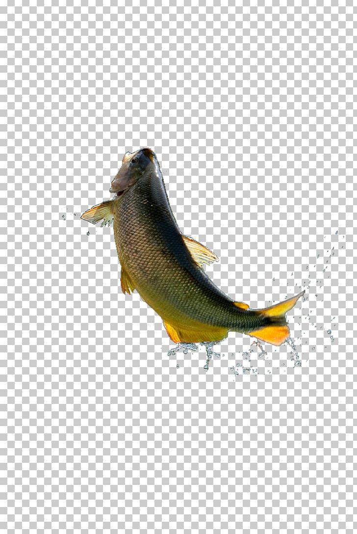 Grass carp clipart clip art black and white Grass Carp Fish PNG, Clipart, Animal, Aqua, Aquatic, Bird, Carp Free ... clip art black and white