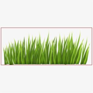 Grass clipart vector svg transparent Grass Vector - Flower Grass Vector Png #2577128 - Free Cliparts on ... svg transparent