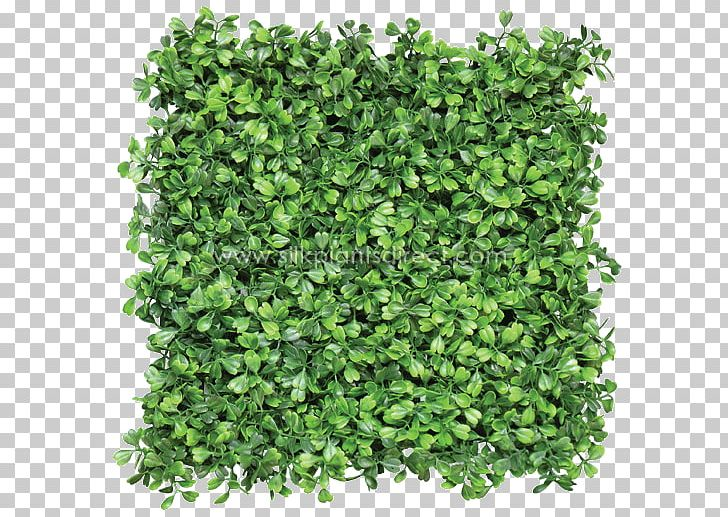 Grass greener on other side of fence clipart banner Box Mat Hedge Green Wall Fence PNG, Clipart, Artificial Flower ... banner