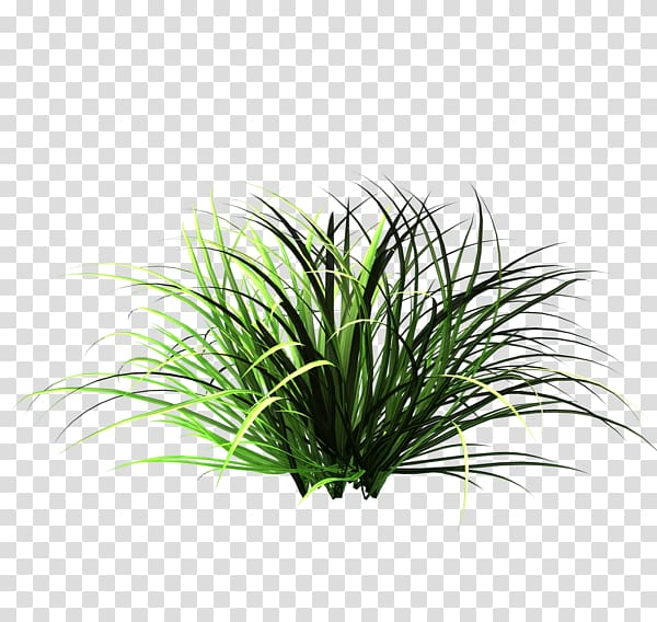 Grass patch clipart image freeuse stock Green grass, Patch of grass Lawn Garden , Nature Tall Grass ... image freeuse stock