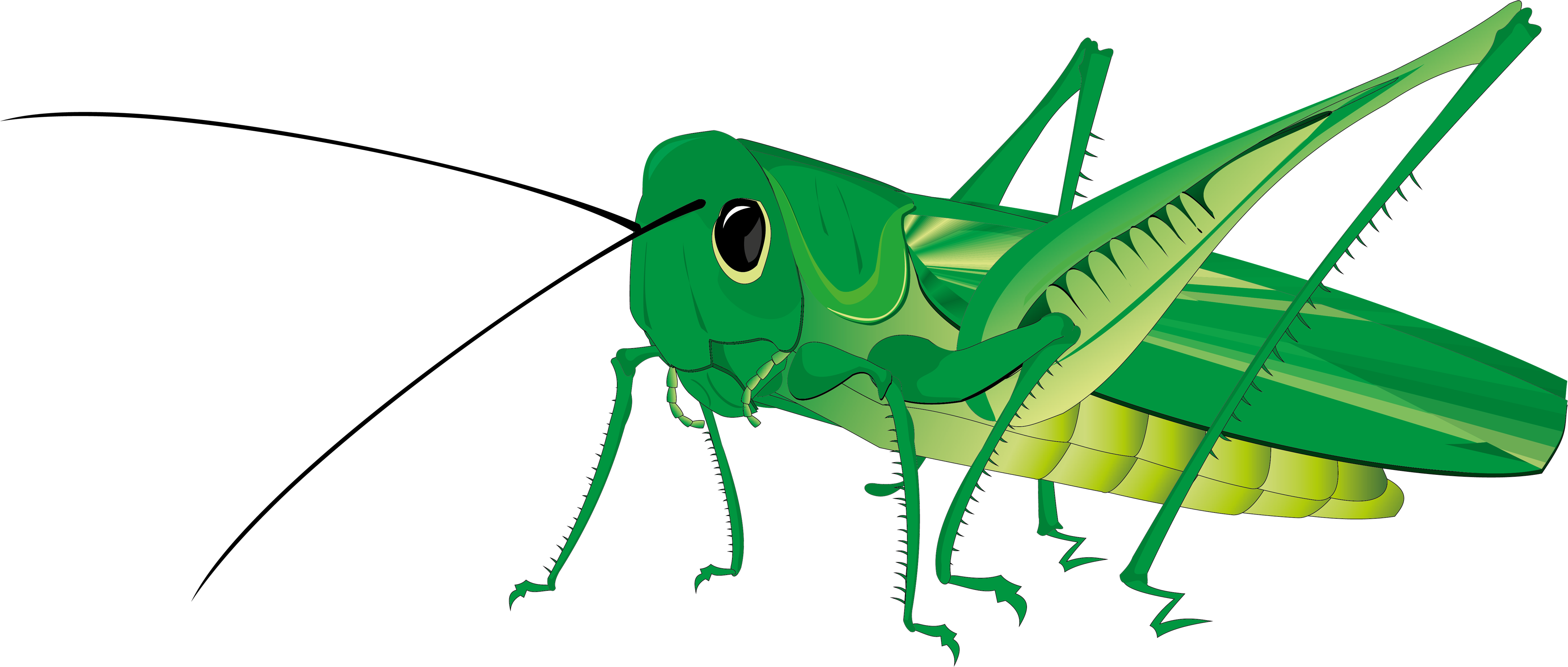 Grasshoppers clipart clip art freeuse stock Grasshopper PNG images free download clip art freeuse stock