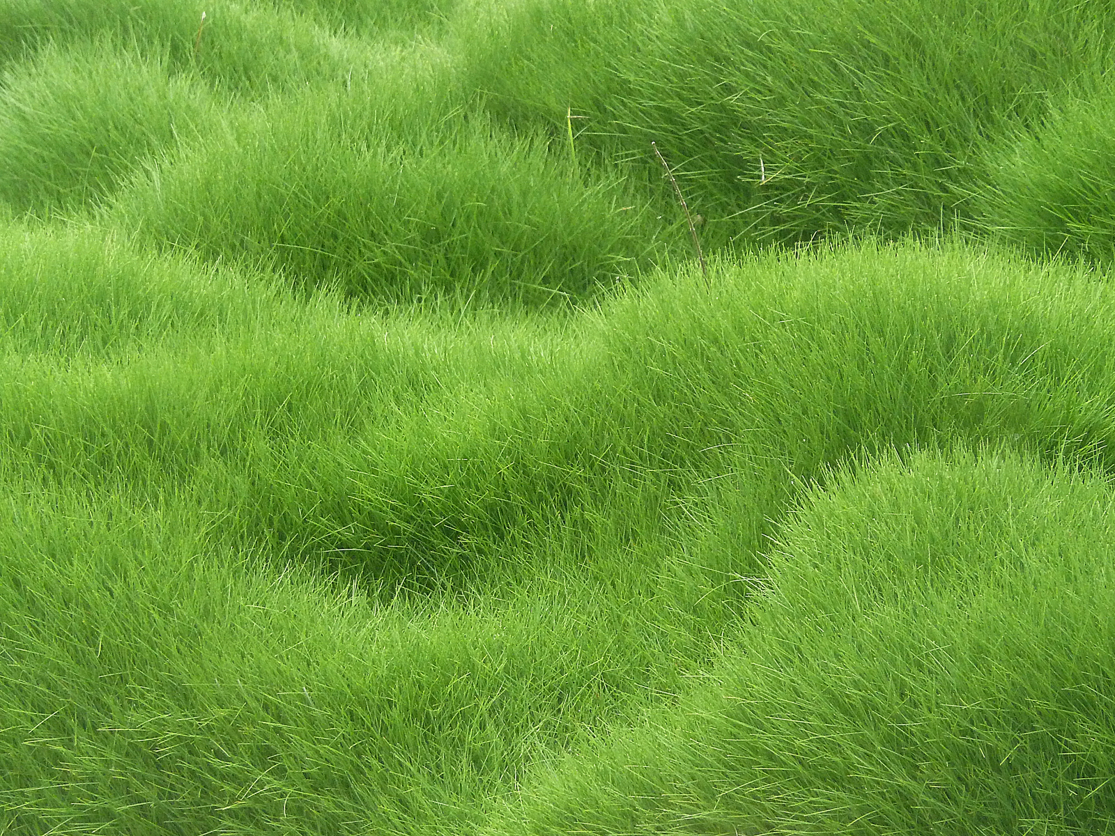 Grassy background clipart image download Grassy Background | Gallery Yopriceville - High-Quality Images and ... image download