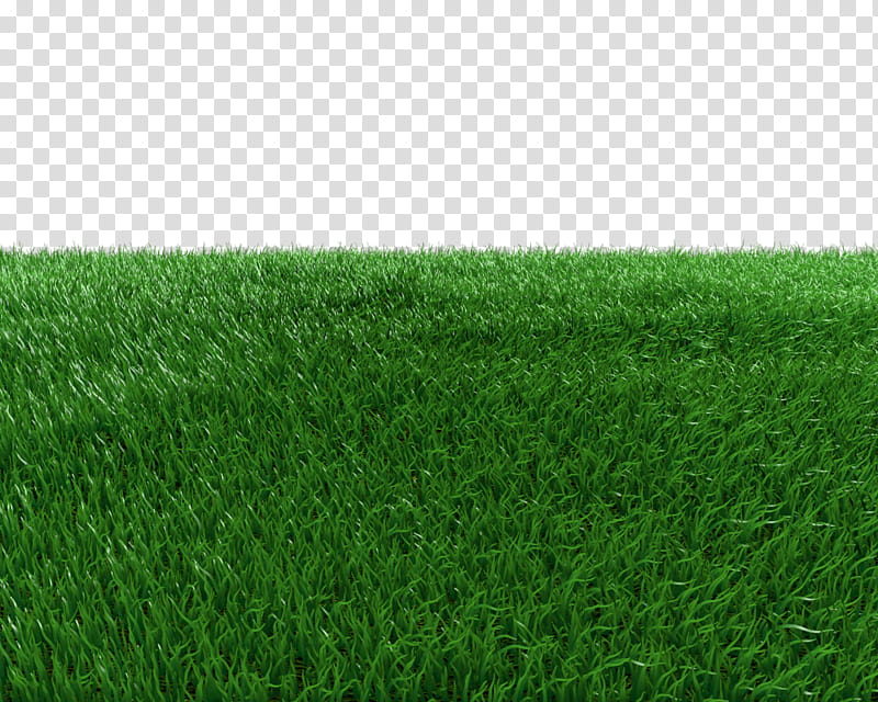 Grass Field transparent background PNG clipart | HiClipart clip transparent stock