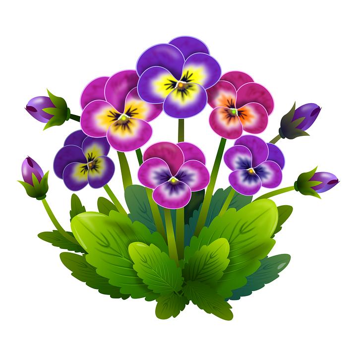 Gratis clipart blomster clip transparent Gratis billede på Pixabay - Stedmoderblomster, Blomster, Fjeder ... clip transparent