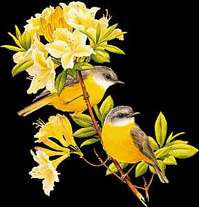 Gratuit clipart image black and white Cliparts oiseaux gratuits - ClipartFox image black and white