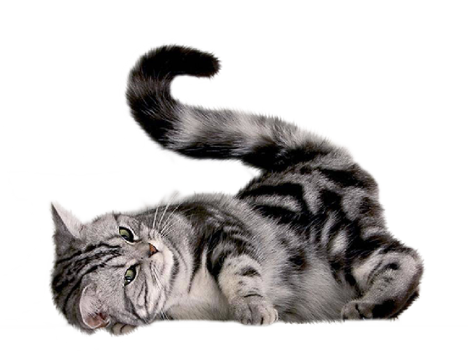 Gray tabby cat clipart graphic free stock Cat PNG Transparent Free Images | PNG Only graphic free stock