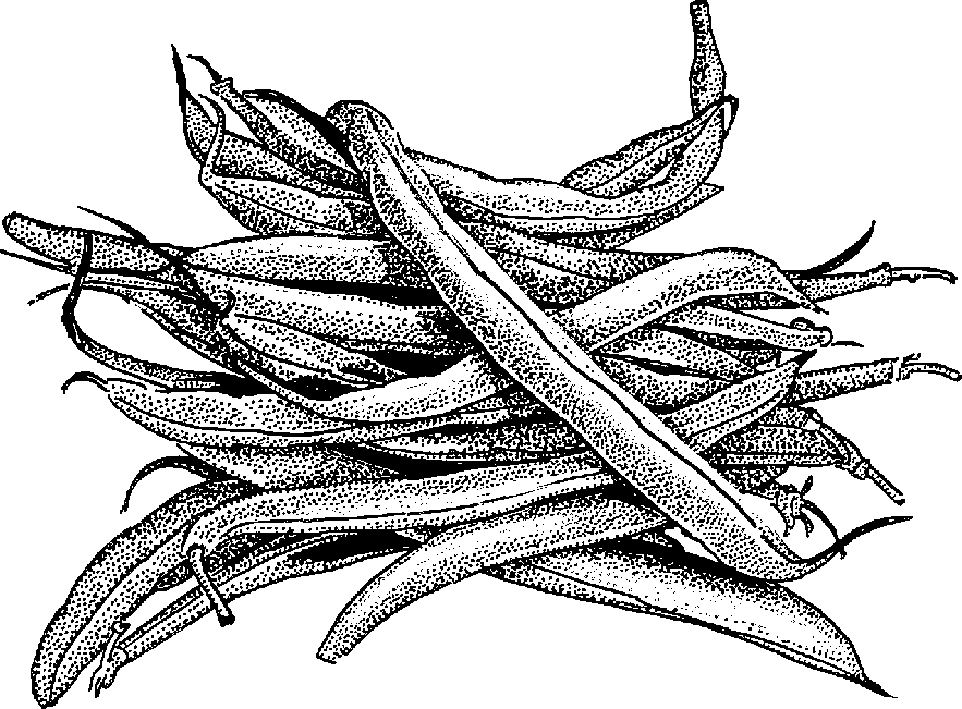 Grean beans black and white clipart free transparent stock Free Black Beans Cliparts, Download Free Clip Art, Free Clip Art on ... transparent stock