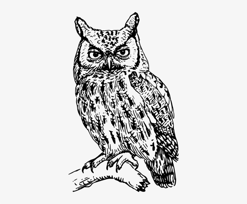 Great grey owl clipart graphic freeuse Great Grey Owl Clipart Hard - Owl Clipart Black And White - Free ... graphic freeuse