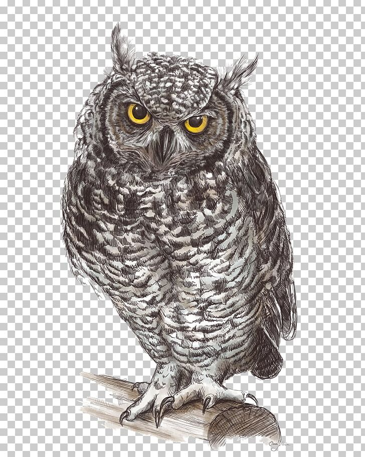 Great grey owl clipart png freeuse stock Great Grey Owl Drawing Fauna Illustration PNG, Clipart, Animals ... png freeuse stock