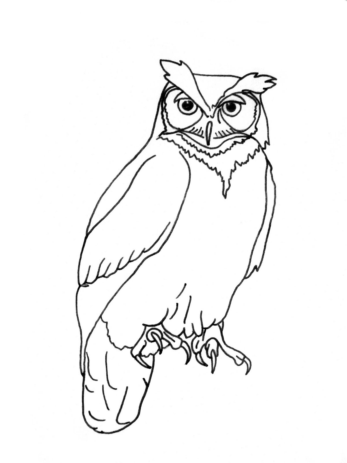 Great grey owl clipart royalty free library Realistic Great Horned Owl Outline | www.galleryhip.com - The ... royalty free library