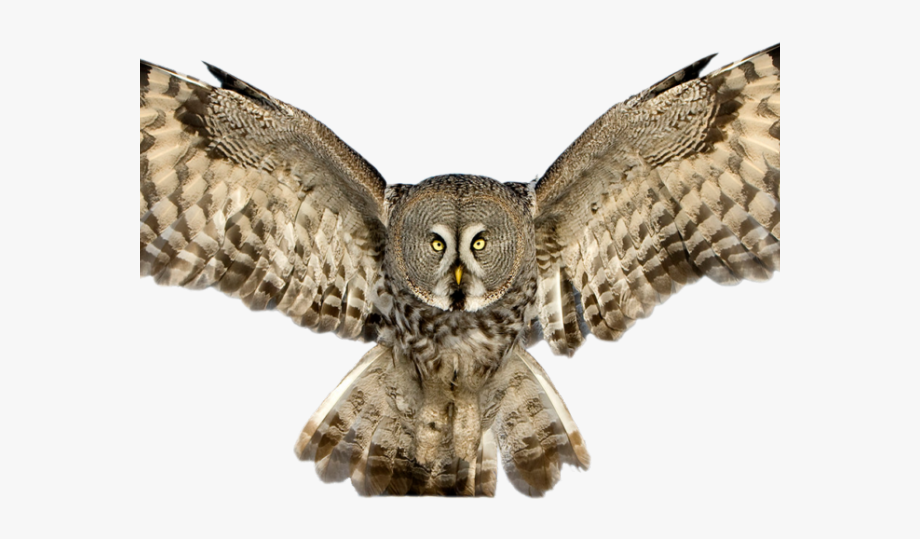 Great grey owl clipart freeuse download Horned Owl Clipart Flying - Owl With Spread Wings , Transparent ... freeuse download