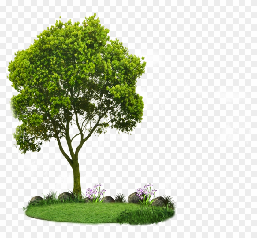 Great tree small and the small tree great clipart transparent stock Plan View Tree Clipart - Clipart Small Trees, HD Png Download ... transparent stock