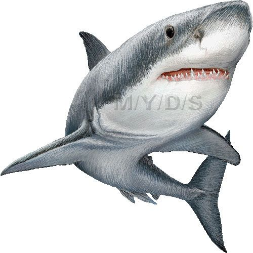 Great white clipart clip art freeuse stock Great White Sharks clipart picture / Large | Ink | Shark painting ... clip art freeuse stock