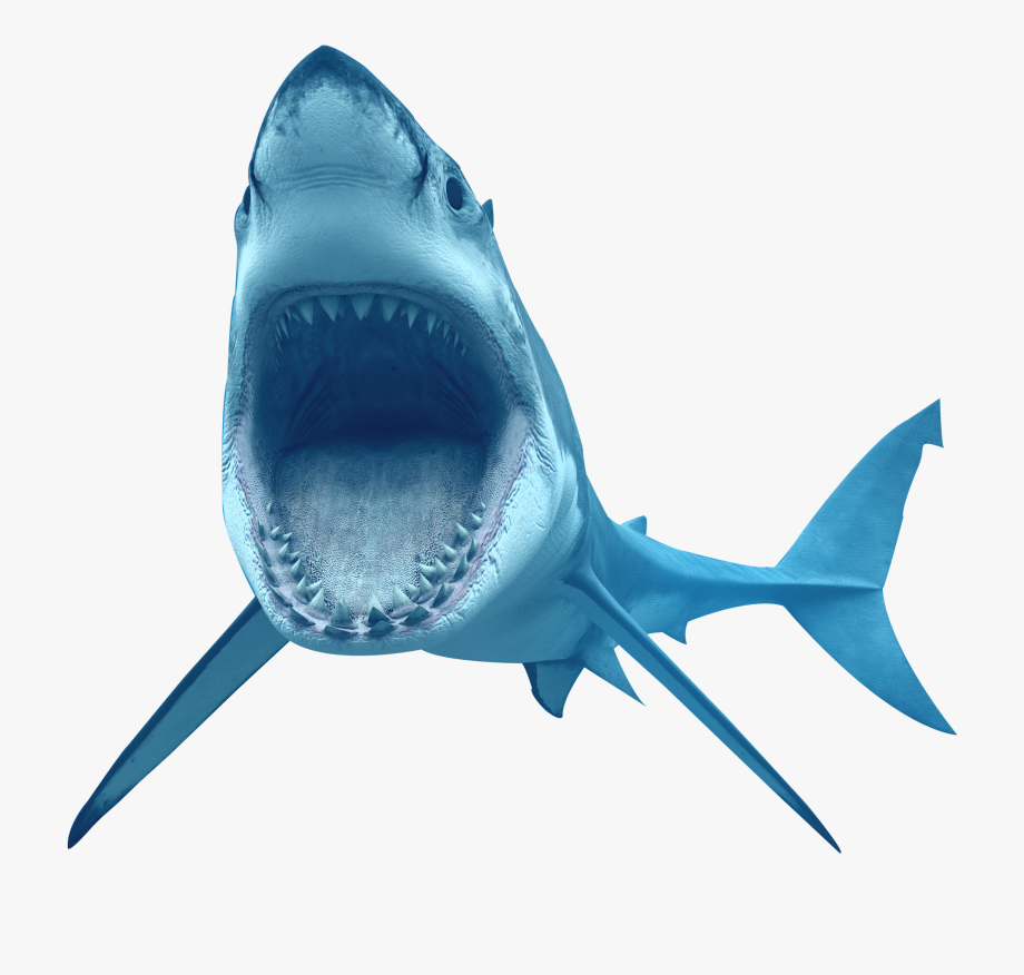 Great white clipart vector library download Bull Shark Clipart Transparent Background - Great White Shark ... vector library download