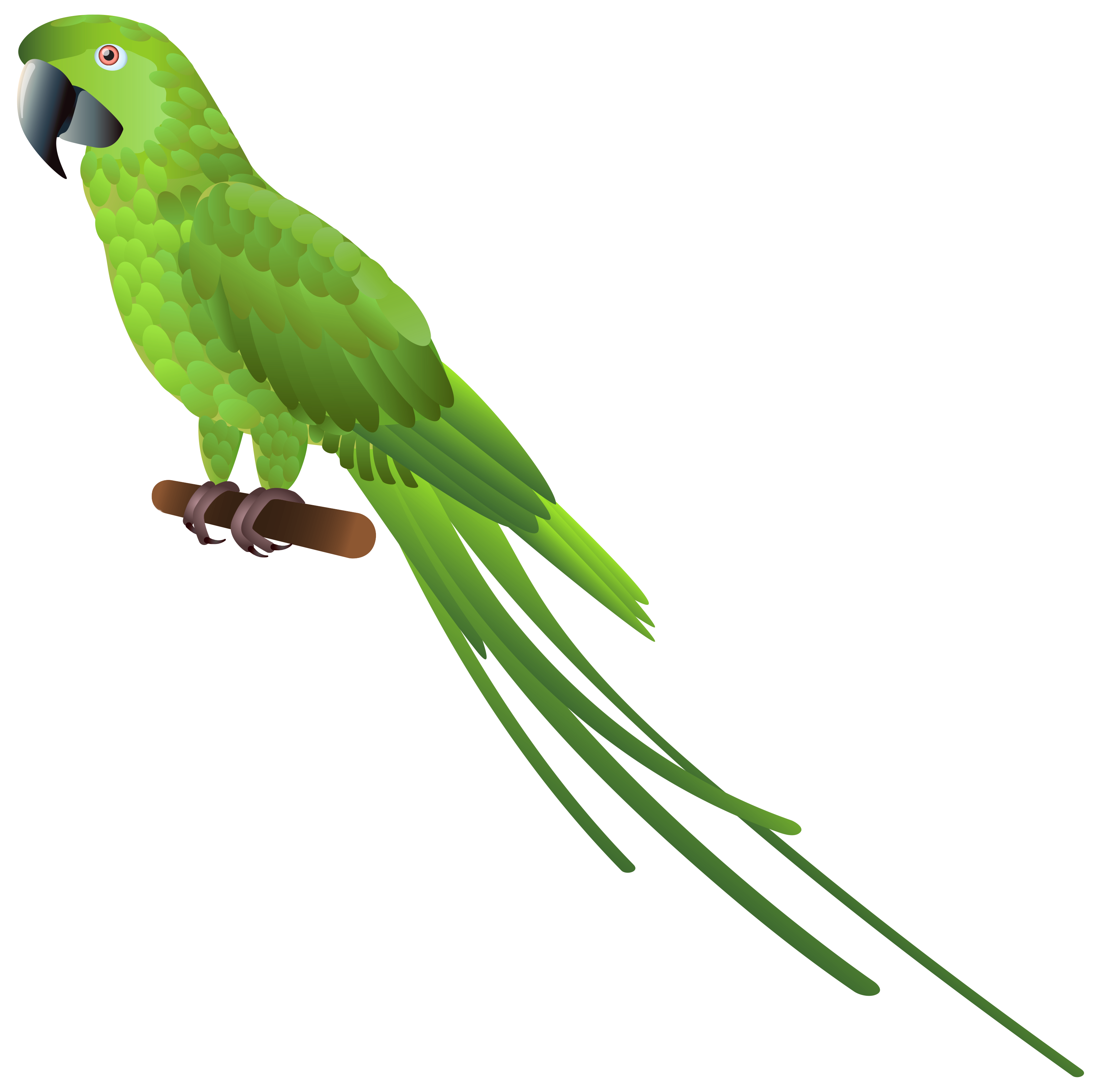Green fish clipart black and white library Green Parrot PNG Clipart - Best WEB Clipart black and white library