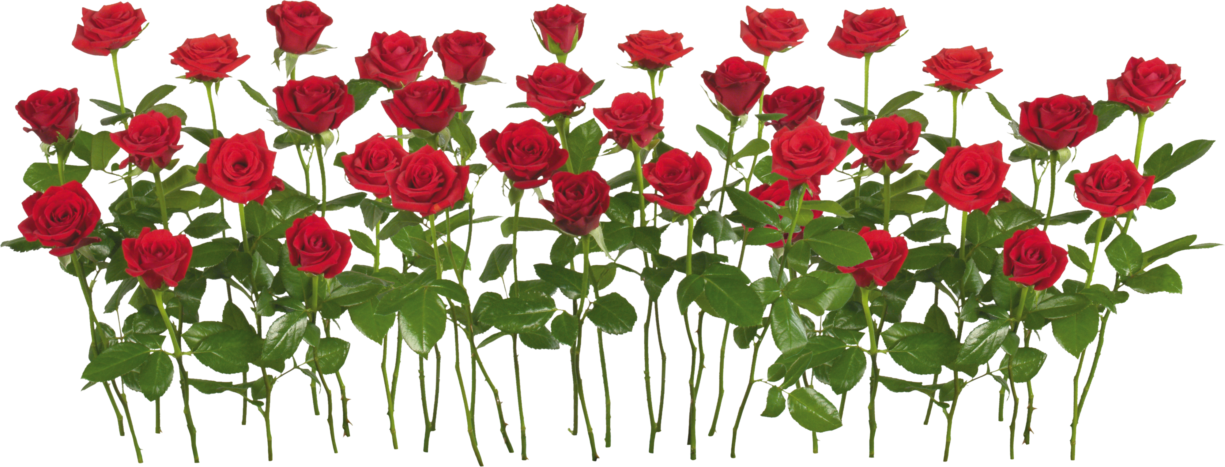 Green flower bed clipart png banner free Rose PNG flower images, free download banner free