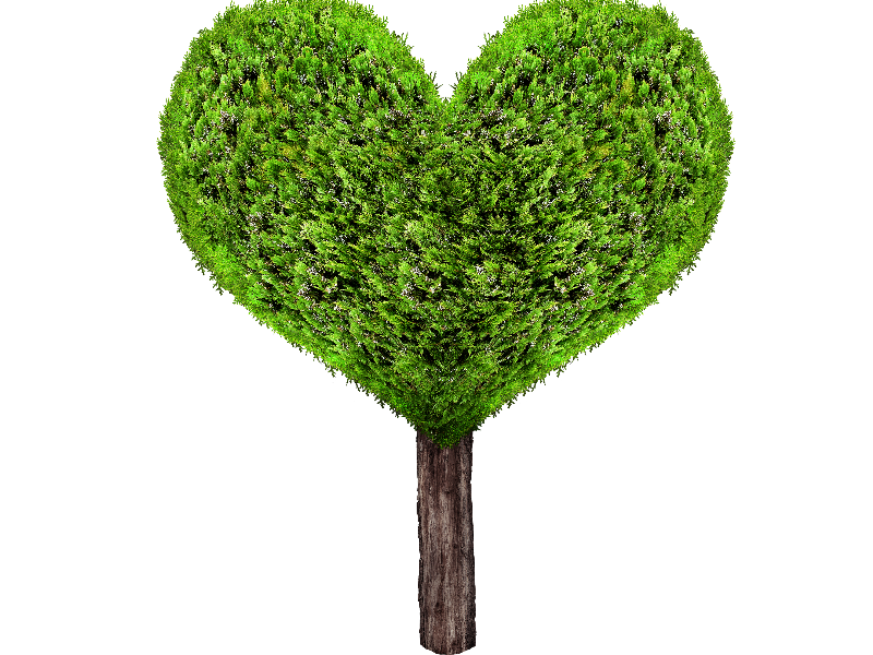 Tree with heart shaped leaves clipart picture transparent stock Green Heart Tree PNG (Isolated-Objects) | Textures for Photoshop picture transparent stock