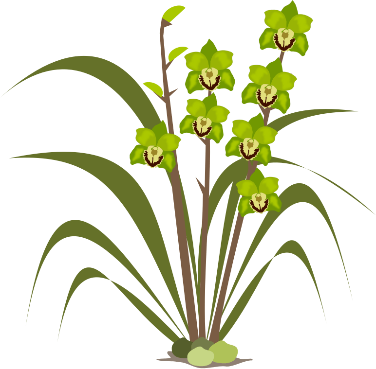 Green orchid clipart